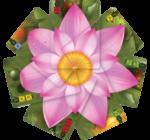 Lotus társasjáték